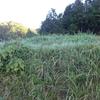 華やぐ山と柿採り