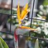 「熱海雑草園」の春