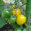 ジイジのミニ菜園