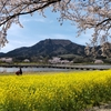 【写真】上堰潟(うわせきがた)公園 ~春は桜と菜の花が見事です