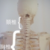 自律神経(首の後ろの骨が出ている)