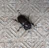 セミの幼虫、ほか小ネタ2本