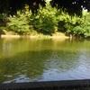 大宮公園の息長鳥、シナガドリ