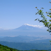 満開のアマギシャクナゲと富士山を遠望 @天城山