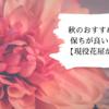 秋のイチオシ切花5選!保ちが良いのはどれ??【現役花屋が教えます!】