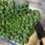 スーパーではあまり見かけない野菜に関するメモ