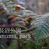 【TamaPlaylist】東京八王子「山に居ると錯覚!?長沼公園トレイル」