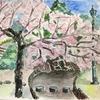 ど素人の水彩画 桜守公園