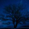 豊頃町にてハルニレの木と星空そして朝の風景【1月6~7日撮影】