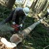 木を伐採する、木の命をいただく。