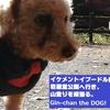 日記「イケメントイプードル銀ちゃん、岩屋堂公園へ行き、山登りを頑張る。」@愛知瀬戸
