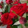 【薔薇の香りで癒し完璧】香りに魅了ローズフェイシャル@新潟市北区オイルマッサージ