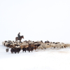 11月 冬のモンゴル撮影ツアー(雪原・馬の群れ・星空・遊牧民・雪景色)