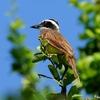 ベリーズ 警戒心の薄い野鳥たち