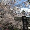 弘前城と田酒桜ラベル