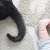 【育児】生まれた時から猫と一緒。ペットが子供に与える影響は?