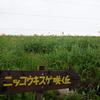 霧ヶ峰(長野県)