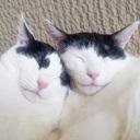 あんもなさん家 ~猫多頭飼い+ミニマリストになりたい夫婦~