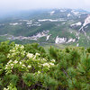 ウコンウツギとニセコ連山