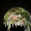 子どもと行ける愛知の観光スポット 9日間だけ公開される廃線愛岐トンネル群(春日井市)