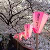 【2017年4月】目黒川の桜並木を夕方から夜にかけて見てきた