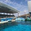 2018年春  名古屋港水族館遠征