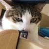 今日もかわいいネコちゃんだニャン♡