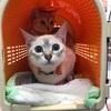 保護猫 マリンとララァは避妊手術をしました!