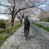 桜を見ながら緑のヘルシーロードをポタリング