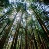 済州島(チェジュ島)初夏の祭り情報 #サリョニの森エコヒーリング