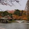 古城公園の桜。。。