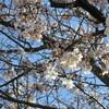 春の森ヶ崎屋上営巣地整備作業が無事に終了いたしました