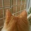 猫ちゃー 施設お戻りは・・・