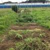 【オルかな農園報告⑩~大量収穫!じゃがナストマトバジルきゅうり~ゴーヤもようやく育ってきたよ】