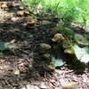 ときめき池とキラキラ池