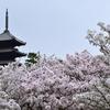 御室桜で有名な仁和寺。桜以外にも魅力がいっぱいの仁和寺を紹介。(Ninnaji, Kyoto)