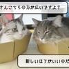 猫の道具 ~ダンボール猫なべ追加~