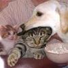 猫用語 ~猫吸い~
