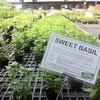 マニラで植物がほしくなったら