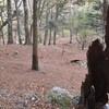 ヌル谷の紅葉遊山 大樹のもと