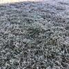 11月に入り気温は一気に氷点下の世界へ… 寒い…
