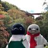 駆け上がれ男山ケーブル!紅葉ペンギンケーブルカー、夢のコラボだ!京都紅葉の旅その3(111)