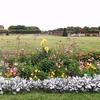 ミモザ・ガーデンの日記 フランスの庭