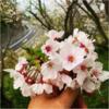 山から海と桜を見るお出かけ