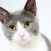大切なことはすべて猫から学べる??村上春樹とネコカフェ「てまりのおうち」のお話。