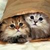 猫の性格を知ってあげましょう                       猫を同居させる際には組み合わせを大切に