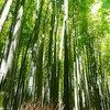 【安井金毘羅宮】京都でオススメの神社とお土産【実体験】