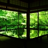 【京都旅行記】 青もみじの瑠璃光院。インスタ映えします。