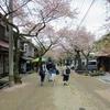 風情ある宿場町の桜並木【がいせん桜まつり】@新庄宿