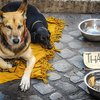 インド、交差点で物乞いに袖乞い